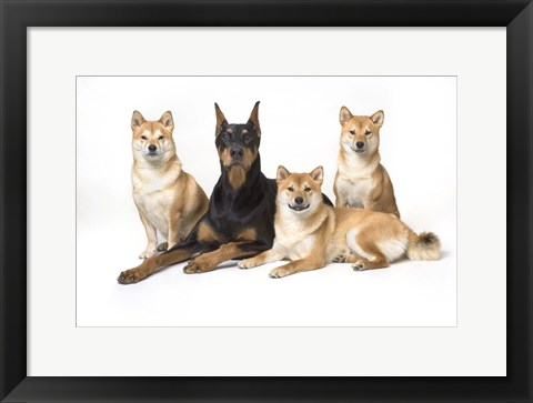 Framed Dog Portrait Of Four Print