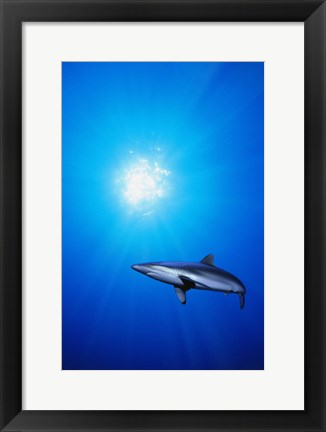 Framed Shark Water Print