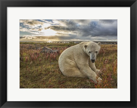 Framed White Bear Under The Clouds Print