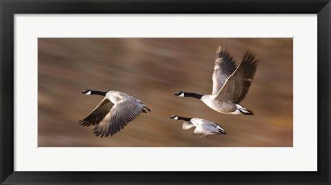 Framed Flying Geese Trio Print