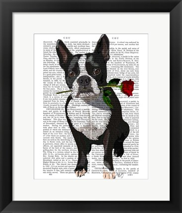 Framed Boston Terrier with Rose in Mouth Print