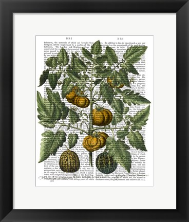 Framed Peppers 5 Print