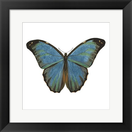 Framed Butterfly Botanical III Print