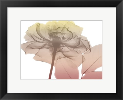 Framed Rose Dawn 1 Print