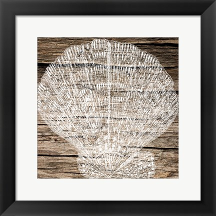 Framed Clam Shell On Wood Print