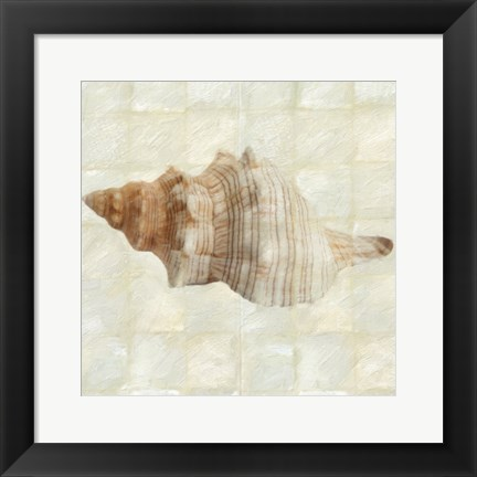 Framed Mother of Pearl Shell 2 Print