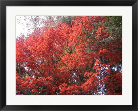 Framed Red Tree Print