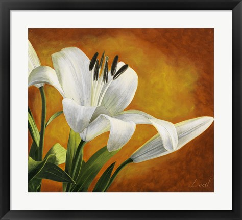 Framed Lily Bloom Print