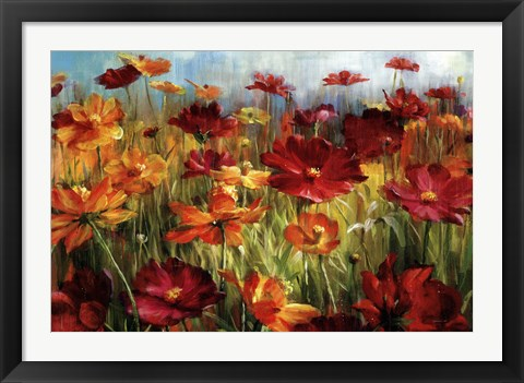 Framed Cosmos In The Field Print
