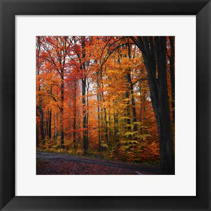Framed Rainbow Fall Print