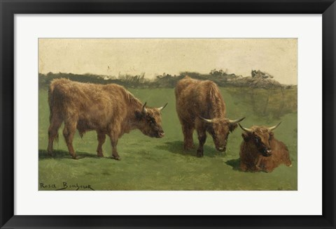 Framed Three Studies of Reddish-Haired Cows on a Meadow Print
