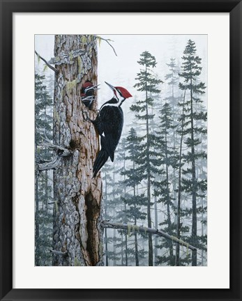 Framed Piliated Woodpeckers Print