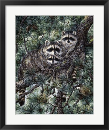 Framed Racoons Print
