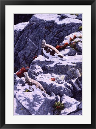 Framed White-Tailed Ptarmigan Print
