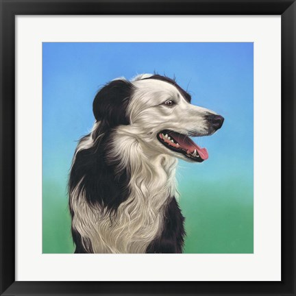 Framed Collie Jud Print