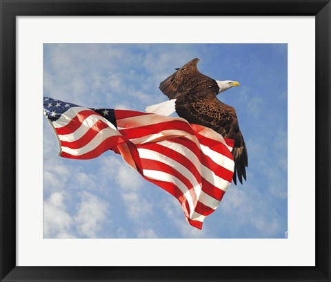 Framed Flight of Freedom Bald Eagle Print