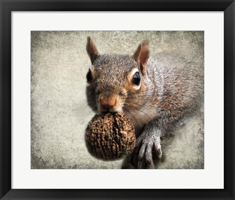 Framed Gray Squirrel With Nut Print