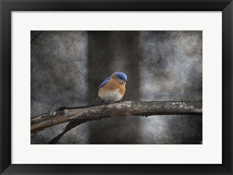 Framed Last Day Home Bluebird Print