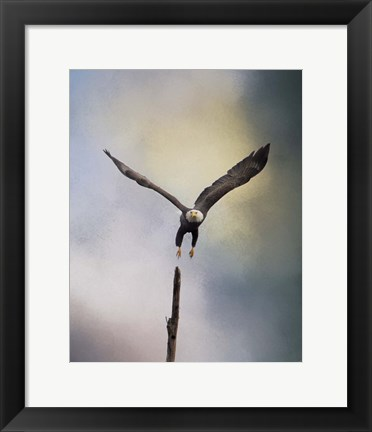 Framed Lift Off Bald Eagle Print