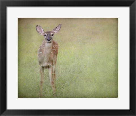 Framed Listening Ears White Tailed Fawn Print