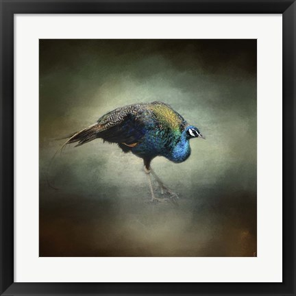 Framed Peacock 10 Print