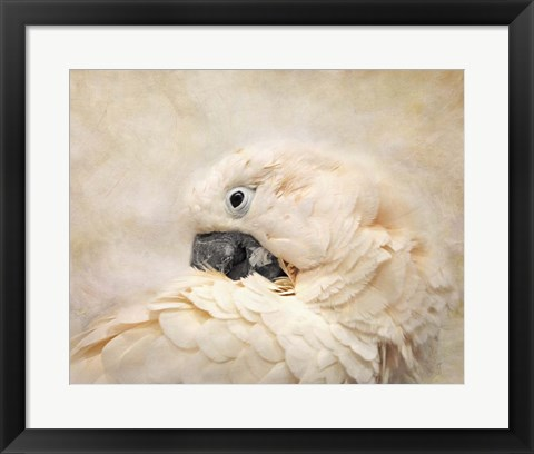 Framed Preening Umbrella Cockatoo Print