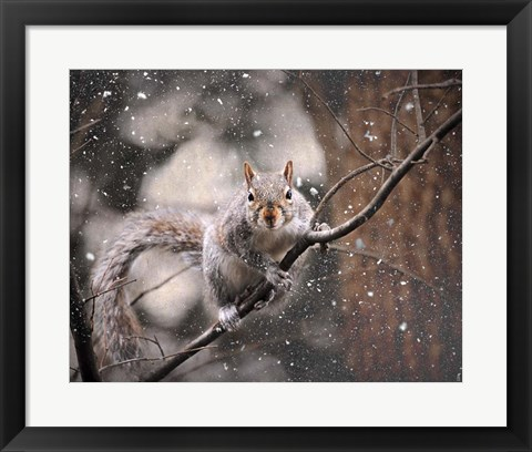 Framed Snow Day Squirrel Print