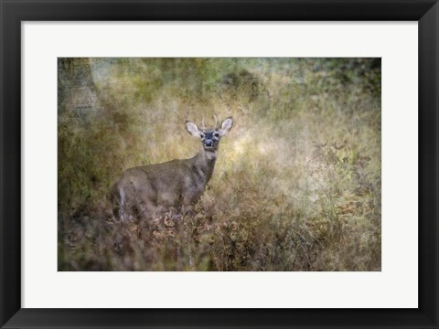 Framed Young Buck Print