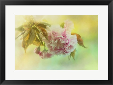Framed Cherry Blossoms In Spring Print