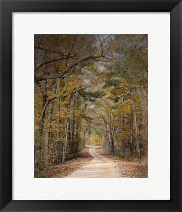 Framed Chickasaw Forest In Autumn 2 Print