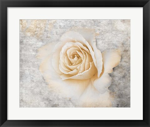 Framed Vintage Rose 2 Print