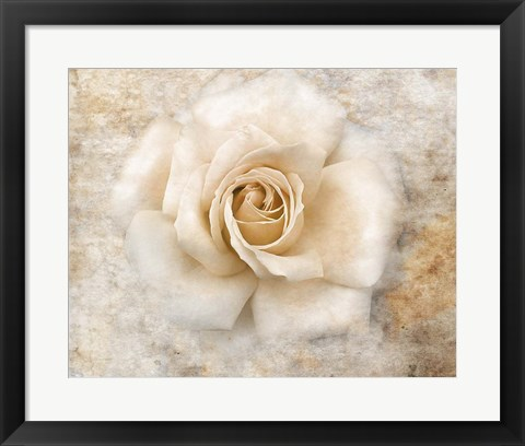 Framed Vintage Rose 5 Print
