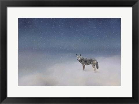 Framed Coyote In Winter Print
