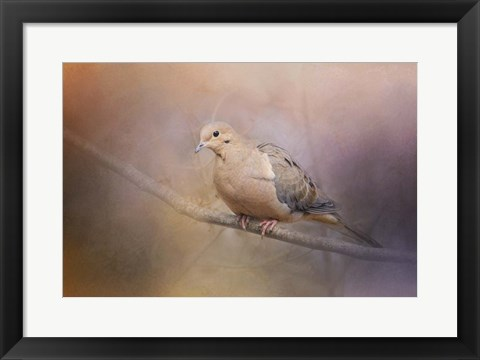 Framed Mourning Dove On A Winter Evening Print