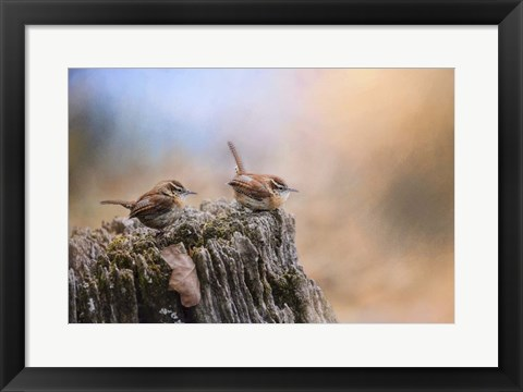 Framed Two Little Wrens Print