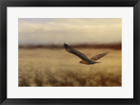 Framed Redtail In The Field Print
