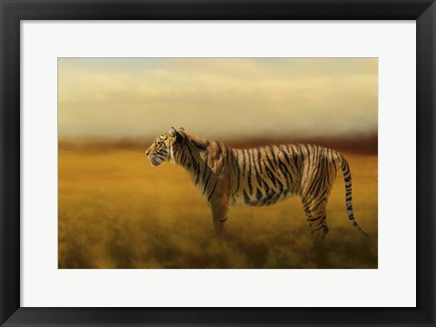 Framed Tiger In The Golden Field Print