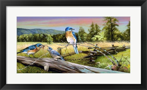 Framed Bluebird Meadow Print