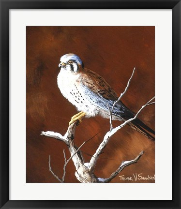Framed Cold Wet Perch Print