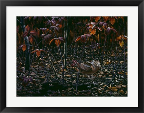 Framed Woodcocks World Print