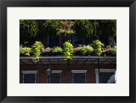 Framed French Quarter, New Orleans, Louisiana Print