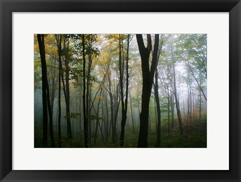 Framed Misty Forest In Autumn Print