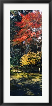 Framed Statue of Buddha in a garden, Anraku-Ji Temple, Kyoto Prefecture, Japan Print