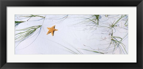 Framed Starfish, Gulf of Mexico Print