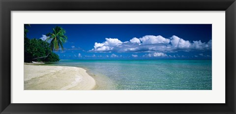 Framed Palm Tree in the French Polynesia Print