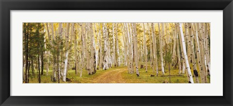 Framed Dixie National Forest, Utah Print
