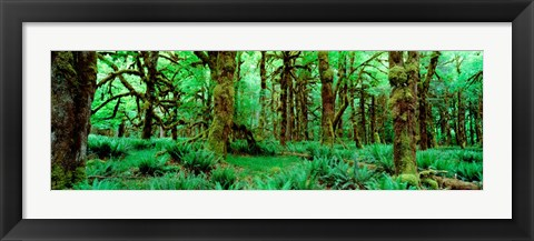 Framed Rain Forest, Olympic National Park, Washington State Print