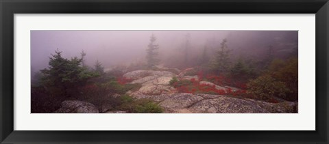 Framed Cadillac Mountain, Acadia National Park, Maine Print