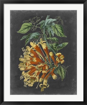 Framed Dramatic Tropical Beauty II Print