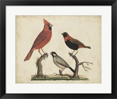 Framed Cardinal & Grosbeak Print